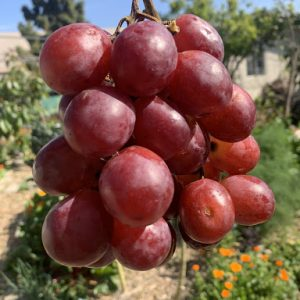 organic red seeded grapes